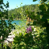 Sinclair Cove