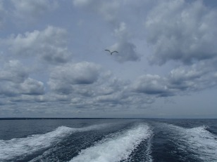 Seagull following the boat