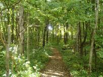 Trail through the woods