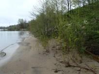 Natural Shoreline