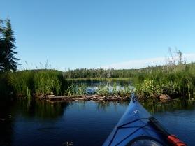 Beaver Dam on Raven Lake