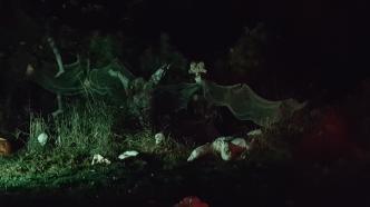 Forest of Mayhem at night