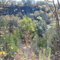 Following Bronte Creek