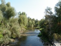 Boyne River below the fish ladder